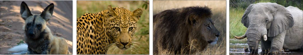A few of my favorite photos from a recent safari in southern Africa